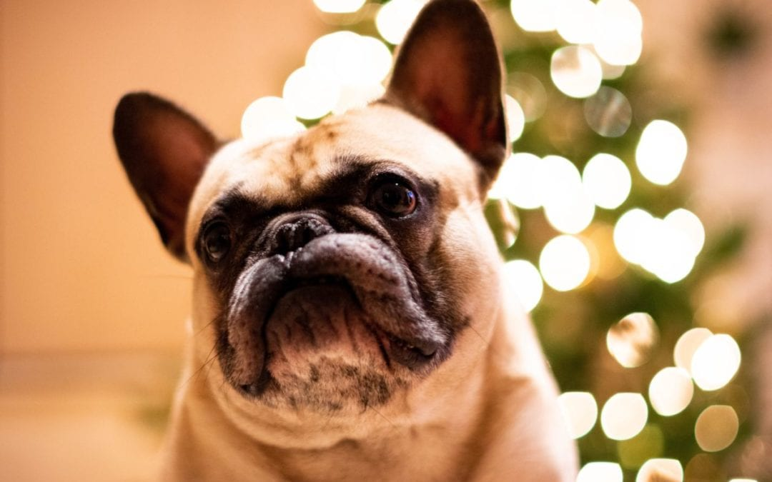 Preventing Holiday Stress for Your Pets